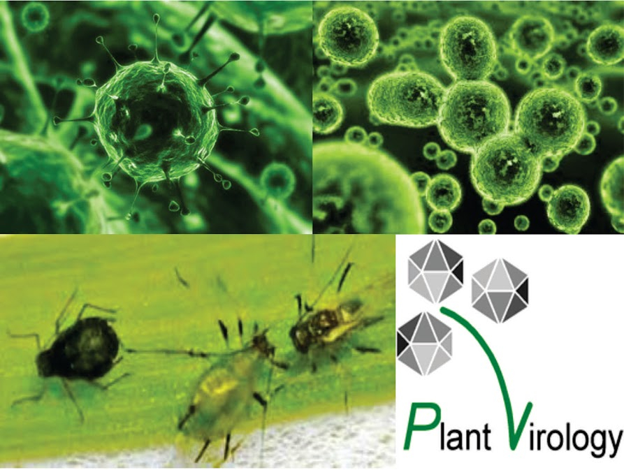 virology-group