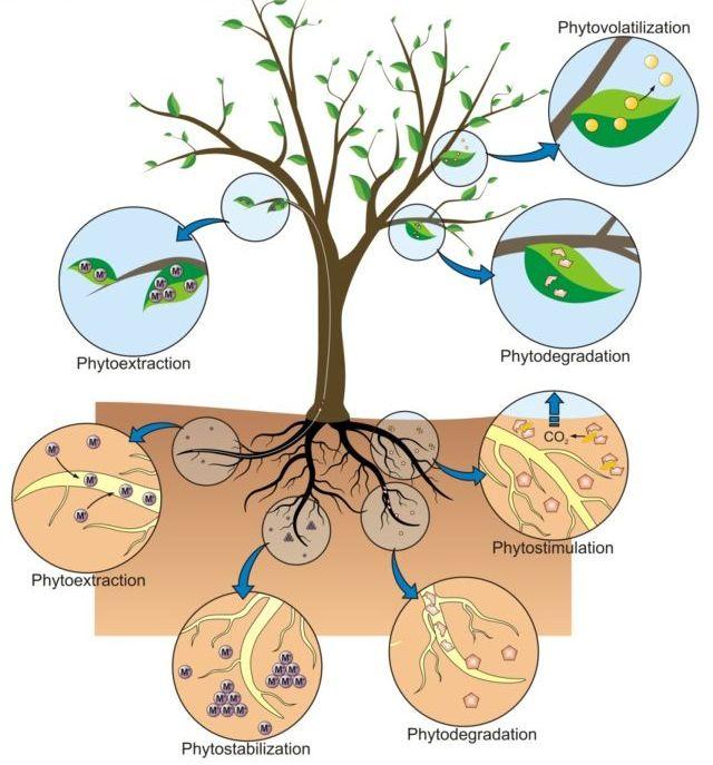 environmental-biotechnology